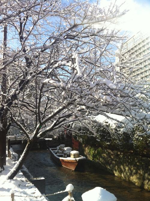 雪化粧。_e0170538_16355267.jpg