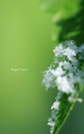 氷の花_d0147742_16325266.jpg