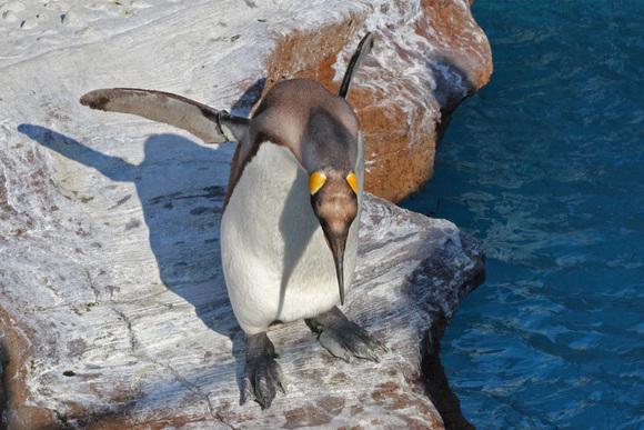 新ペンギン舎OPEN!その2_d0227252_18312136.jpg