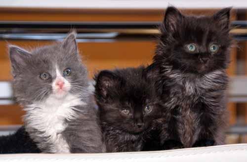 写真展・巨幹残栄に子猫訪問_f0173596_23571543.jpg