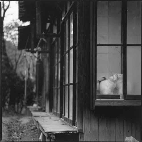 写真展・巨幹残栄に子猫訪問_f0173596_23573250.jpg