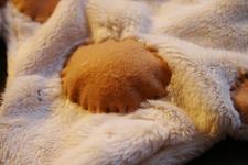猫ちゃん_f0106597_2474978.jpg