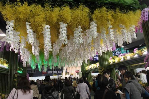 世界らん展日本大賞2012_e0123104_8484745.jpg