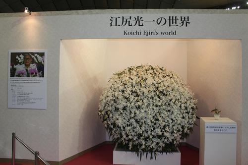 世界らん展日本大賞2012_e0123104_8511611.jpg
