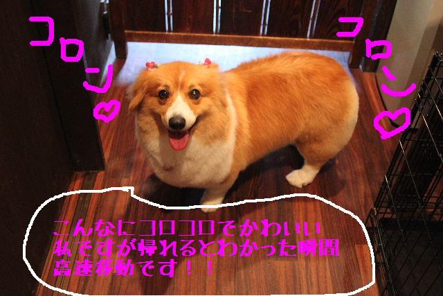 b0130018_1454597.jpg
