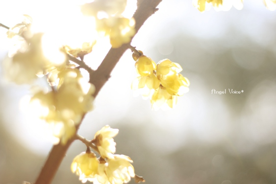 春のにおい_d0147742_155923100.jpg