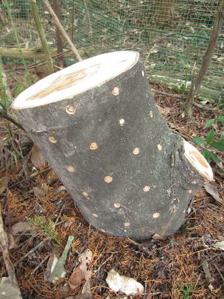 きのこの原木栽培_d0231263_22272442.jpg