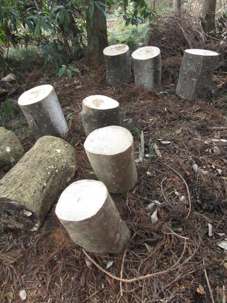 きのこの原木栽培_d0231263_22273728.jpg