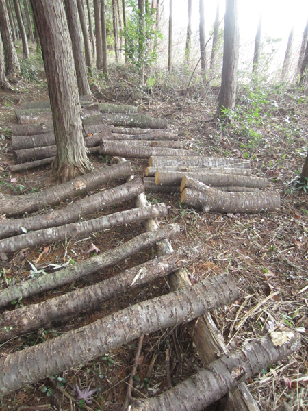 きのこの原木栽培_d0231263_22275079.jpg