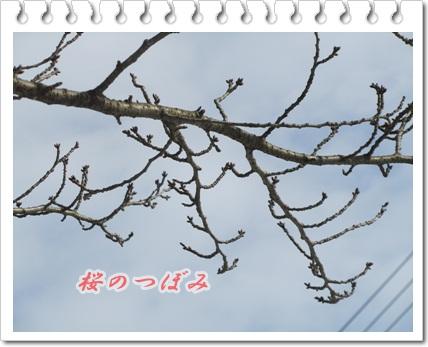 b0149071_165041.jpg