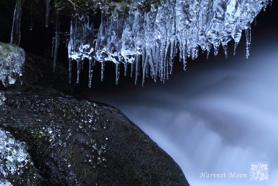 Pieces  of Winter~しずく_b0208495_23514218.jpg