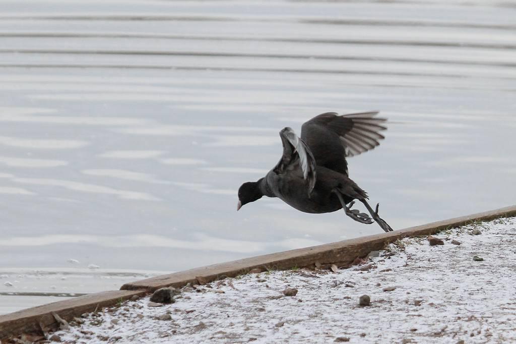 猛禽に襲われ傷ついた鳥達/世界らん展グランプリ_b0024798_11164626.jpg