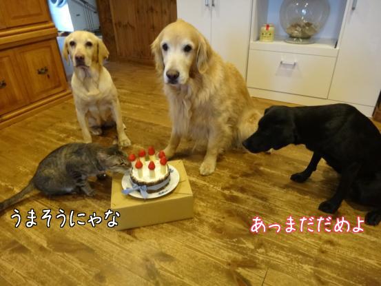 みんなの誕生日_f0064906_18474578.jpg