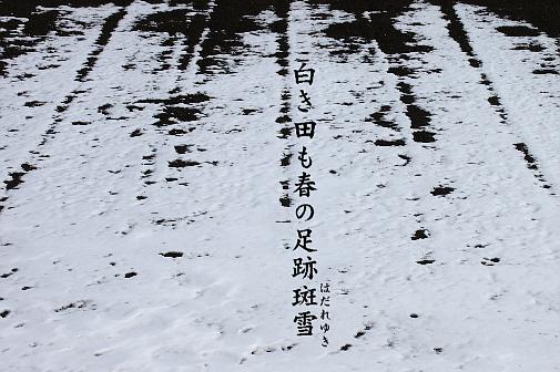 斑雪_e0099713_2022581.jpg