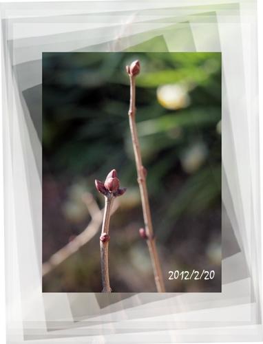 春は名のみの_c0026824_15351969.jpg