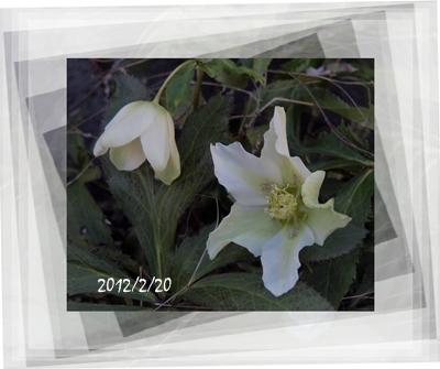 春は名のみの_c0026824_16201682.jpg