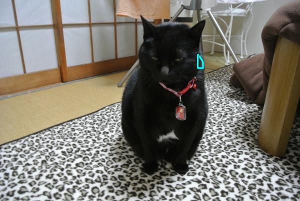 猫バカの理由_a0099131_23511842.jpg