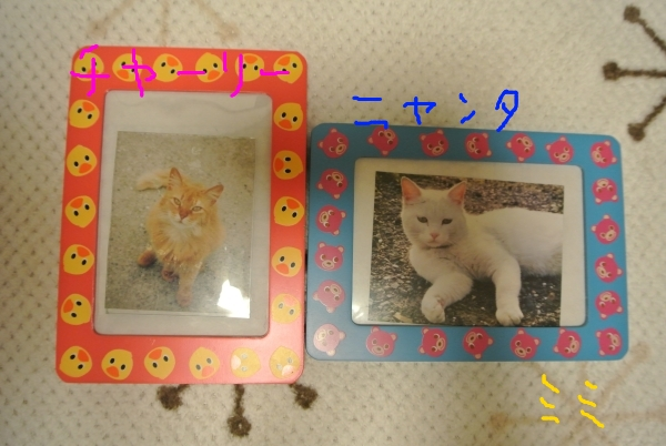 猫バカの理由_a0099131_2351348.jpg