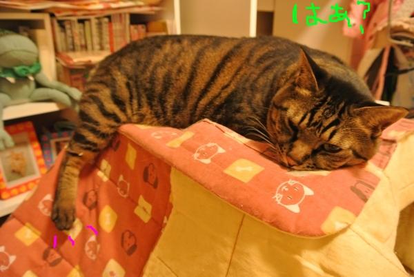 猫バカの理由_a0099131_23514838.jpg