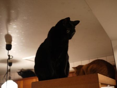 どきどき猫 のぇる編。_a0143140_2355033.jpg
