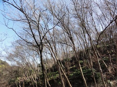 みさき里山クラブ臨時活動日:展望台建設第13日_c0108460_18324934.jpg