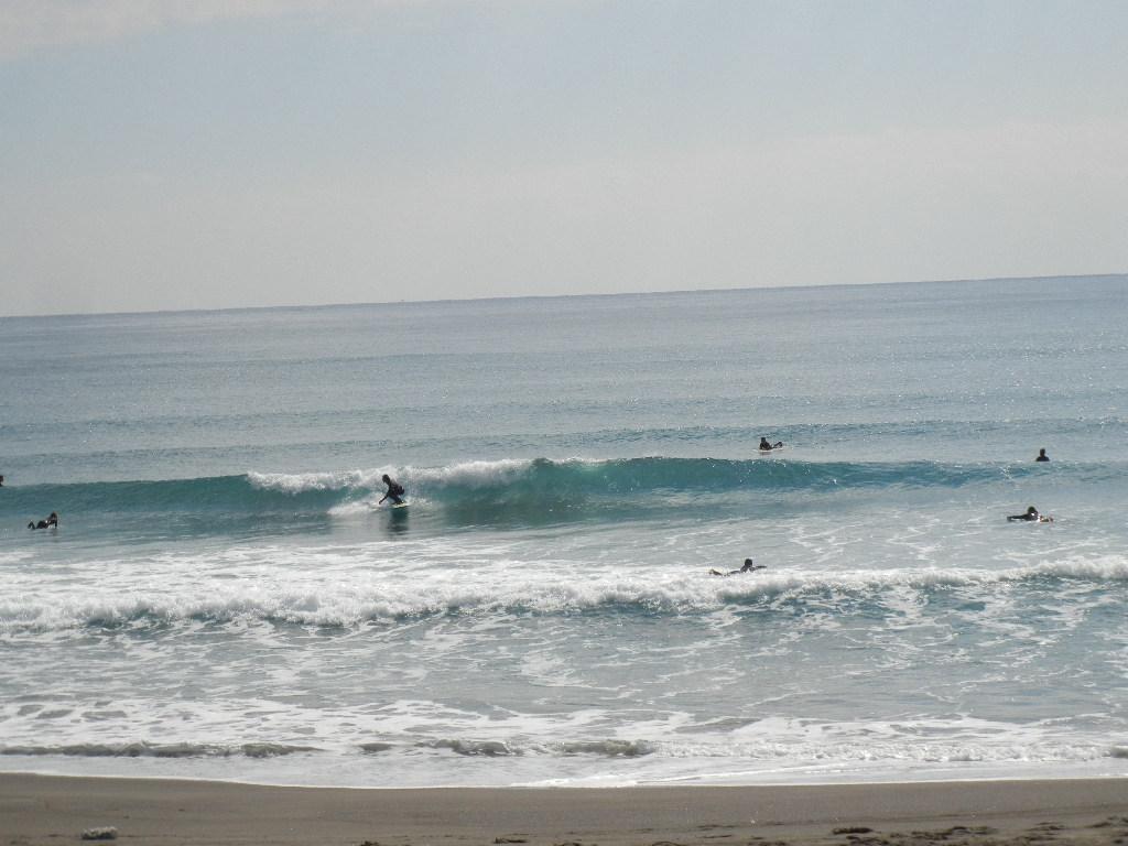 2012年2月20日(月)冬のサーフィンと花の絵!_f0060461_12405757.jpg