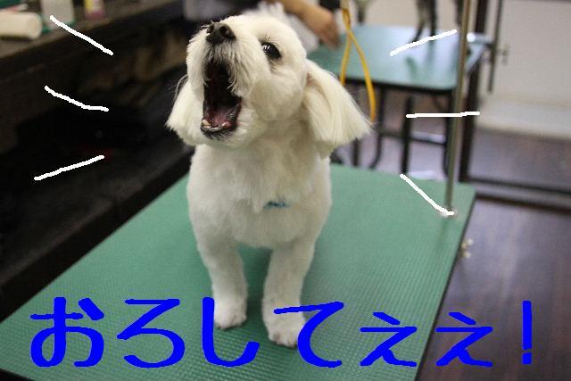 b0130018_11574193.jpg