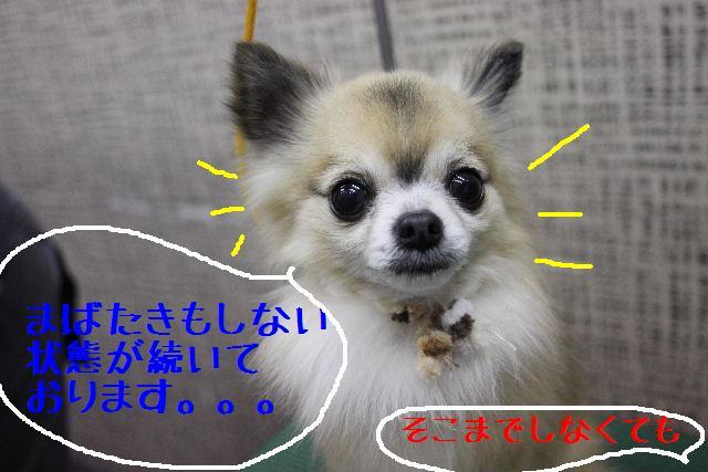 b0130018_14174625.jpg