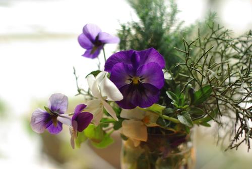 季節の花を撮ってみる_e0171336_2216168.jpg