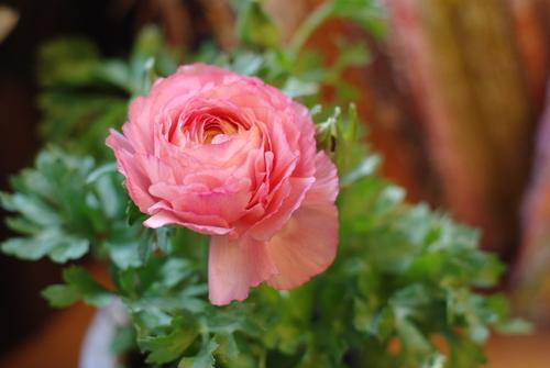 季節の花を撮ってみる_e0171336_22191994.jpg