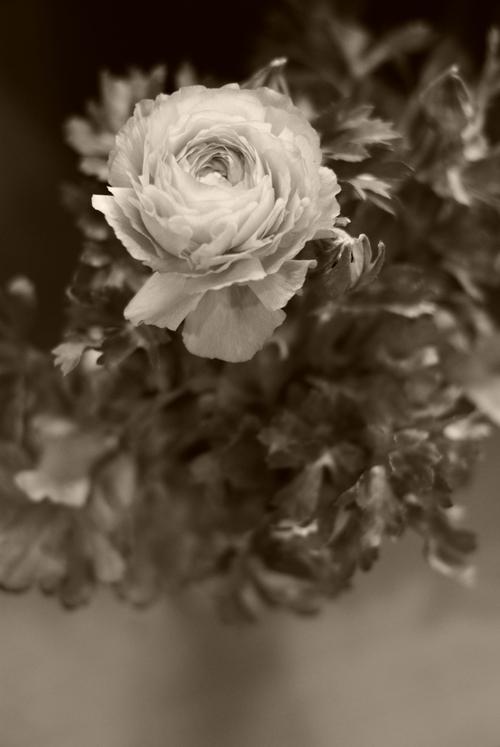 季節の花を撮ってみる_e0171336_2225124.jpg