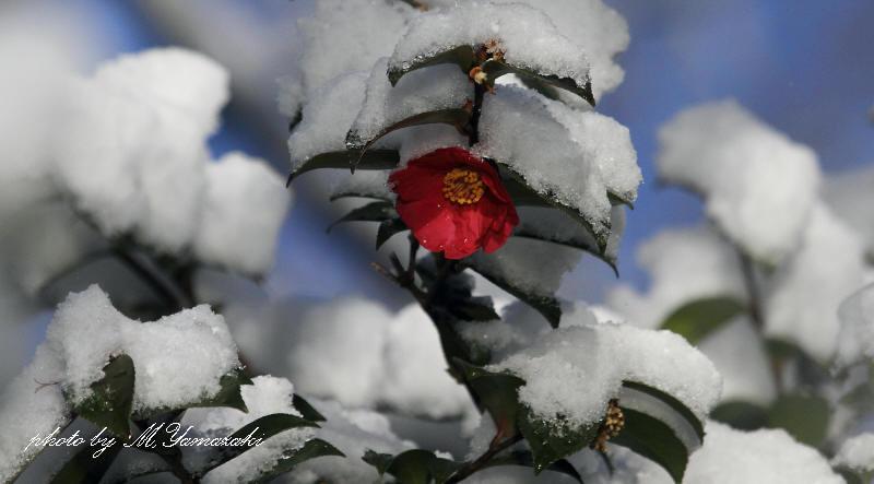 雪化粧_c0217255_5532870.jpg