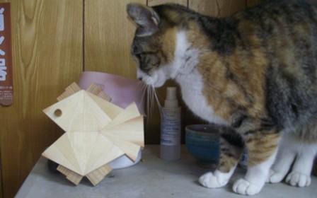 猫の食卓 「さかなちゃん」_f0206159_9491623.jpg