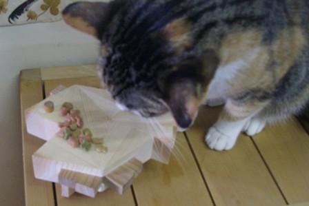 猫の食卓 「さかなちゃん」_f0206159_9493229.jpg