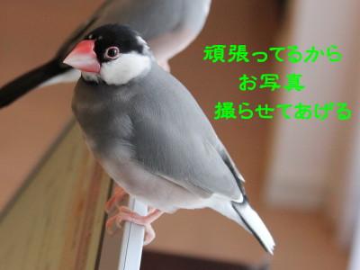 b0158061_1914141.jpg