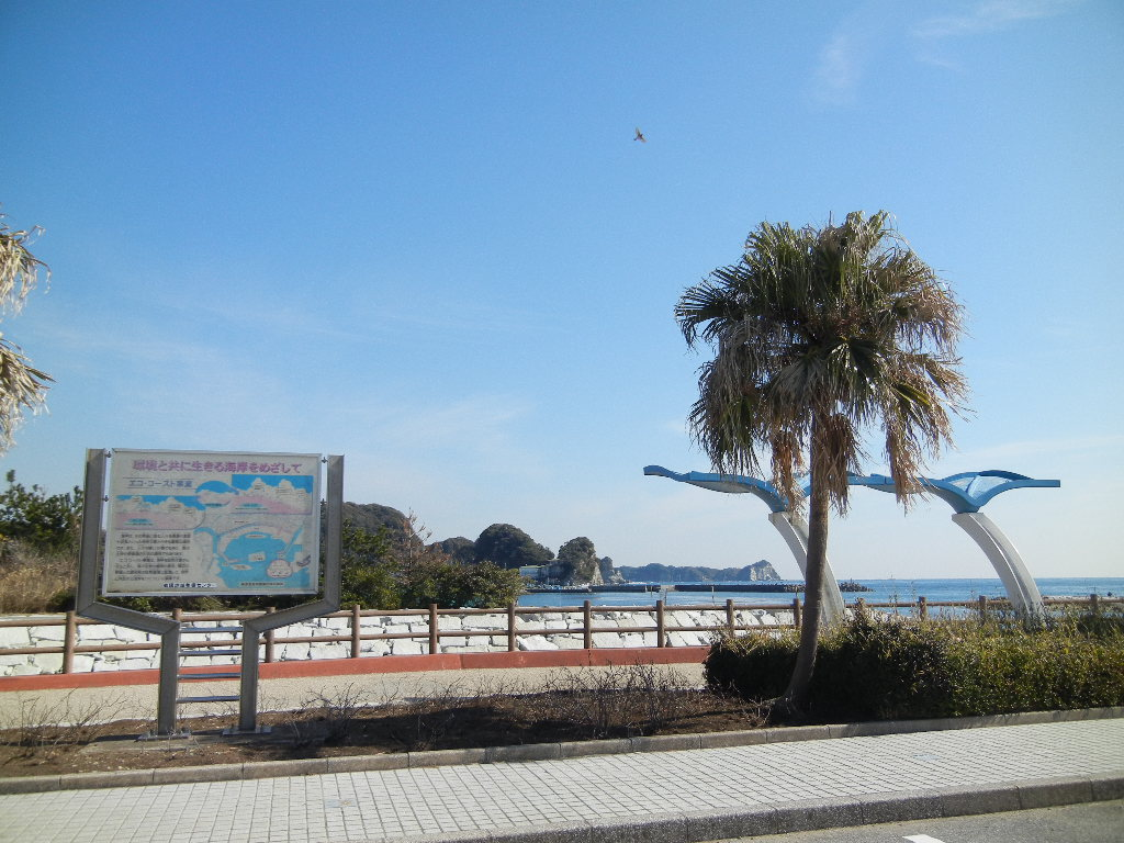 2012年2月21日(火)海までお散歩とこころちゃんが・・・!_f0060461_13232141.jpg