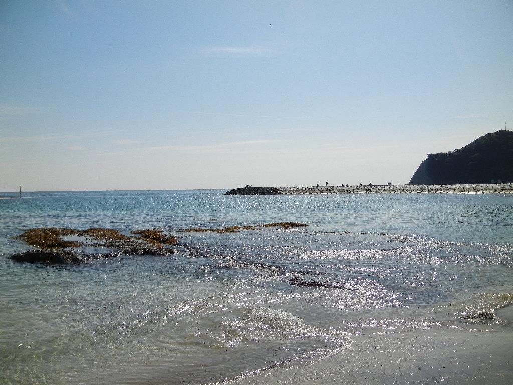 2012年2月21日(火)海までお散歩とこころちゃんが・・・!_f0060461_13243825.jpg
