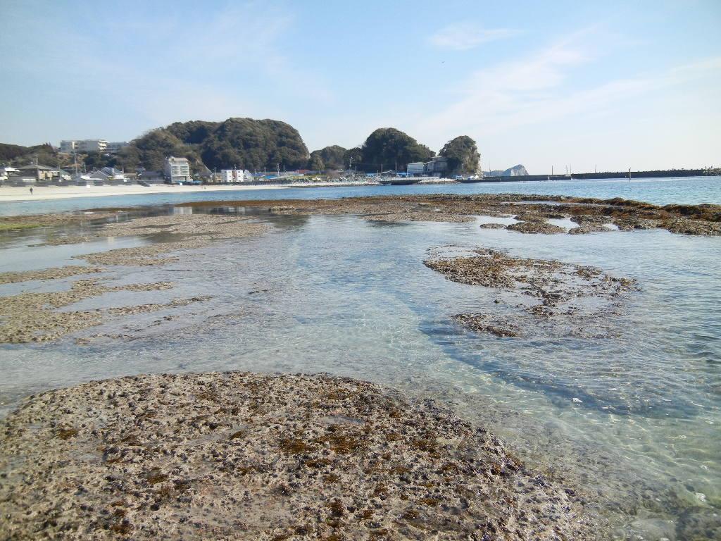 2012年2月21日(火)海までお散歩とこころちゃんが・・・!_f0060461_13264342.jpg