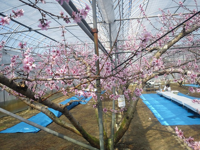 日本一早いお花見!!桜じゃないけど_b0151362_1832291.jpg