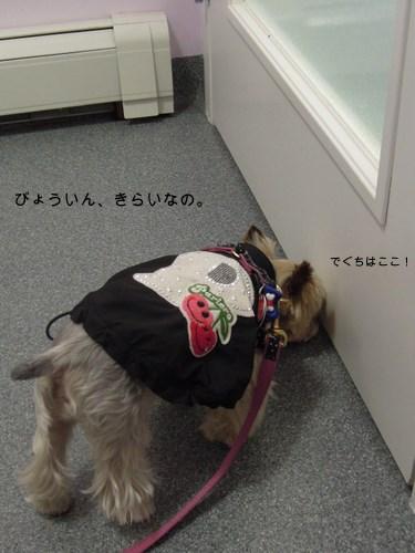 『らりぃちゃん飛行機に乗る』その3_d0233672_1335649.jpg