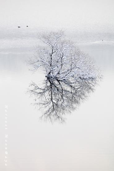 Pieces  of Winter~memory_b0208495_9472092.jpg