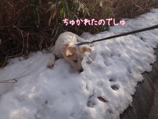 叔父さん五郎_f0064906_18302983.jpg