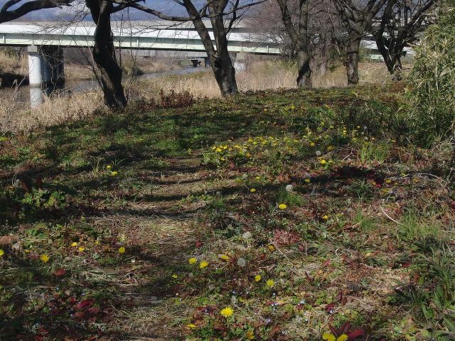 26日にサクラの開花は間に合うか? お花見ウォーキング_f0141310_7421114.jpg