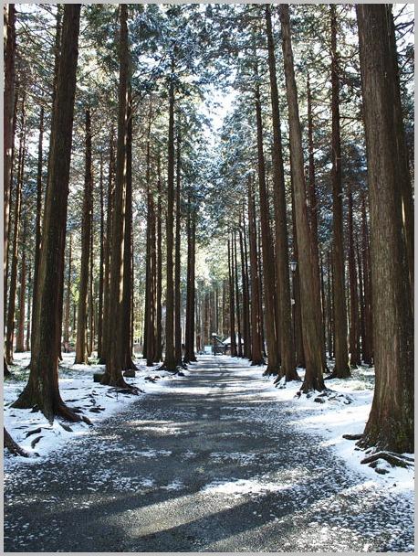 今年の雪景色_d0006718_22452654.jpg