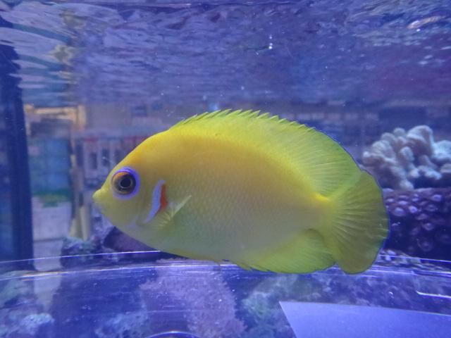 120222 海水魚・水草・淡水魚_f0189122_1253422.jpg