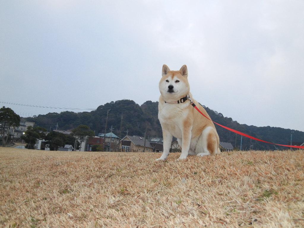 2012年2月22日(水)ブルーベリーヒル散歩とキョン!_f0060461_10114763.jpg