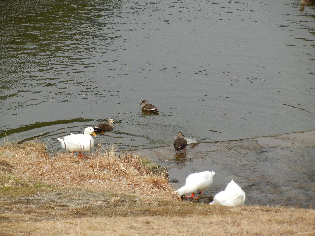 2012年2月22日(水)ブルーベリーヒル散歩とキョン!_f0060461_10183443.jpg