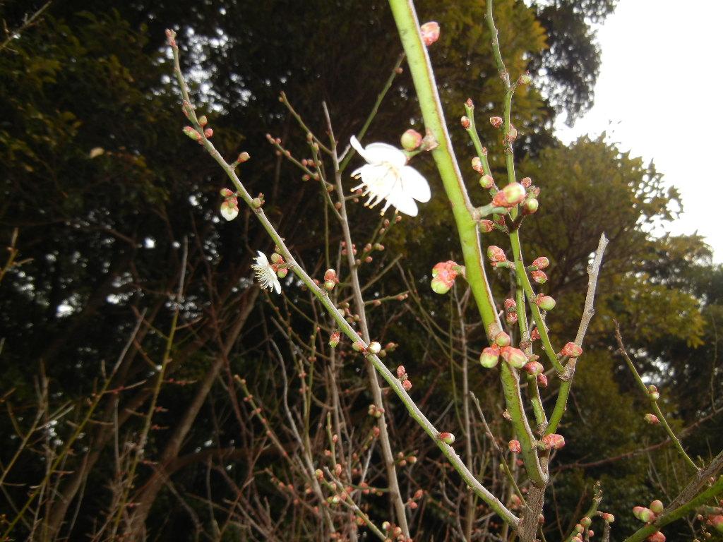 2012年2月22日(水)ブルーベリーヒル散歩とキョン!_f0060461_10215383.jpg