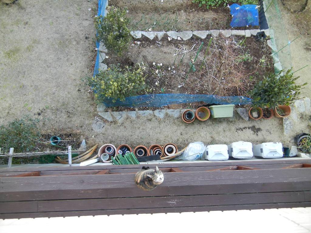 2012年2月22日(水)ブルーベリーヒル散歩とキョン!_f0060461_10324488.jpg