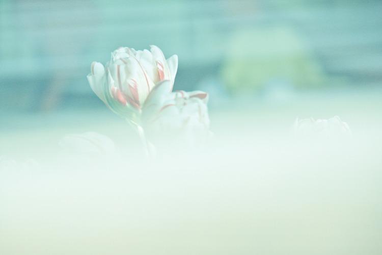 春のきざし。_b0022268_2038065.jpg